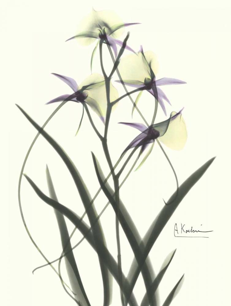 konfigurieren des Kunstdrucks in Wunschgröße Orchids a Plenty in Purple and Yellow von Koetsier, Albert