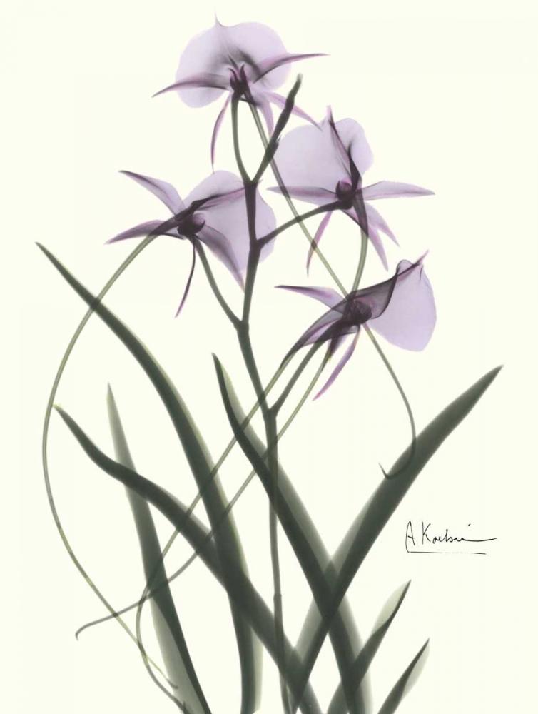 konfigurieren des Kunstdrucks in Wunschgröße Orchids a Plenty in Purple von Koetsier, Albert
