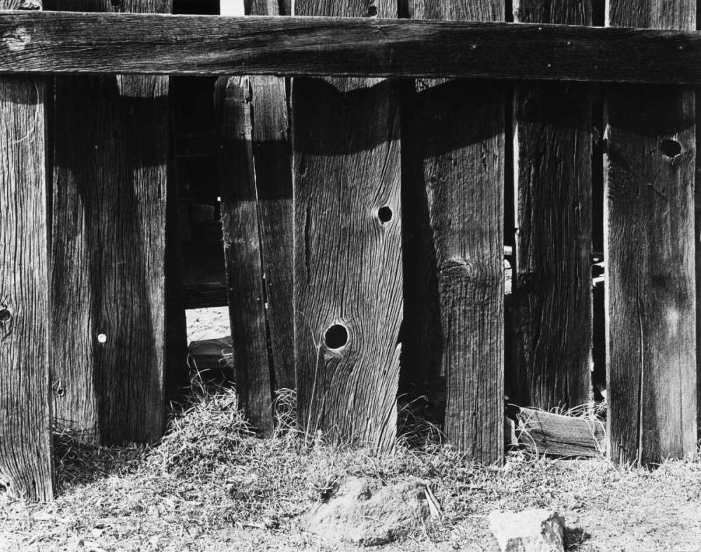 konfigurieren des Kunstdrucks in Wunschgröße Bodi Fence von Koetsier, Albert