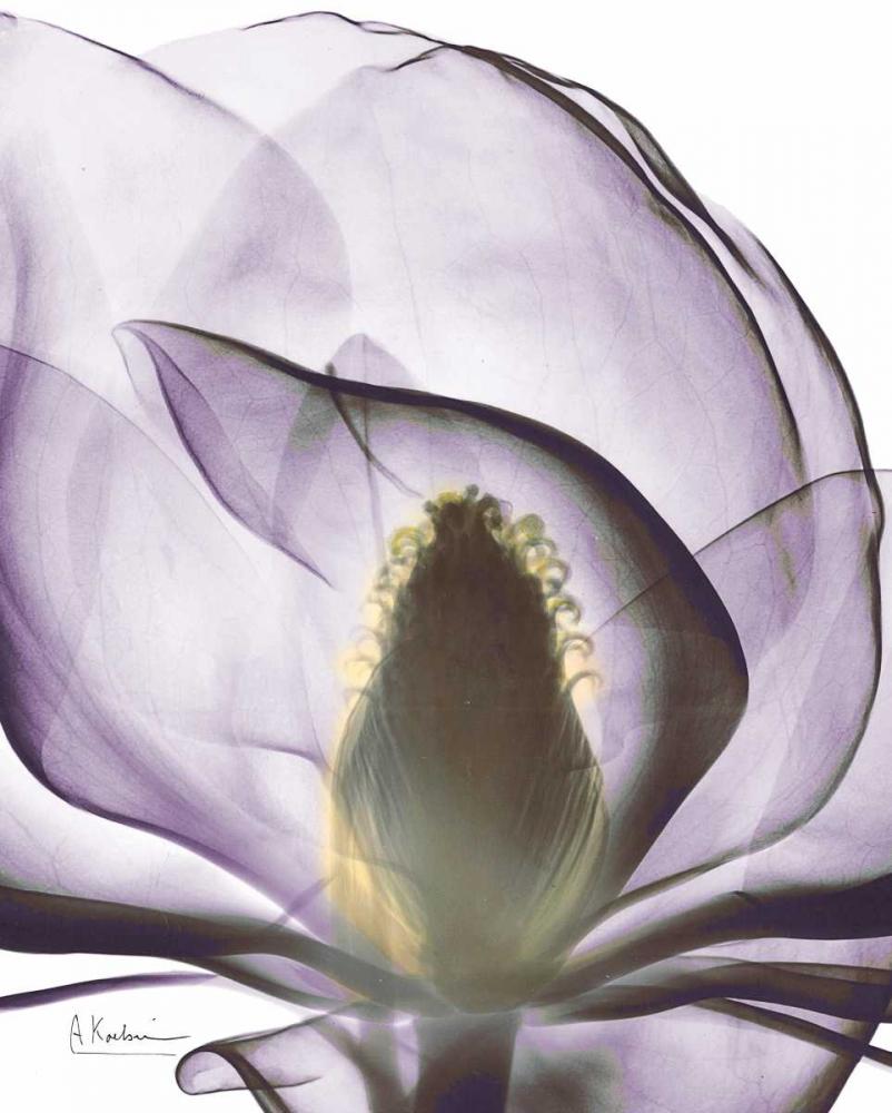 konfigurieren des Kunstdrucks in Wunschgröße Purple Magnolia A43 von Koetsier, Albert