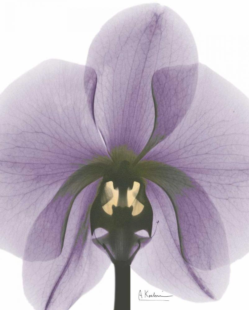 konfigurieren des Kunstdrucks in Wunschgröße Purple Orchid A29 von Koetsier, Albert