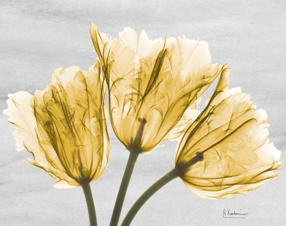 konfigurieren des Kunstdrucks in Wunschgröße Sunny Trio Tulips von Koetsier, Albert