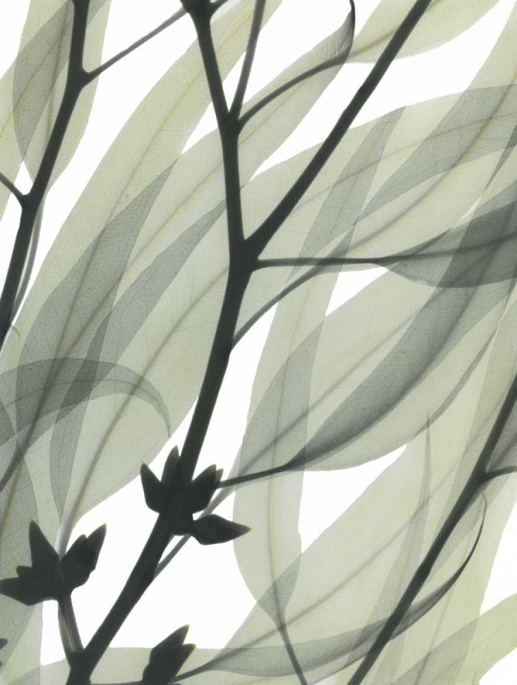 konfigurieren des Kunstdrucks in Wunschgröße Eucalyptus Safari von Koetsier, Albert