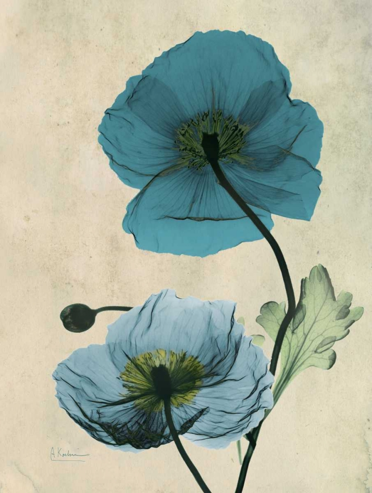 .,Floral,Photography,Botanical ,X-Ray,,AK5-RC-004B,Iceland Poppy,Koetsier, Albert,Vertical