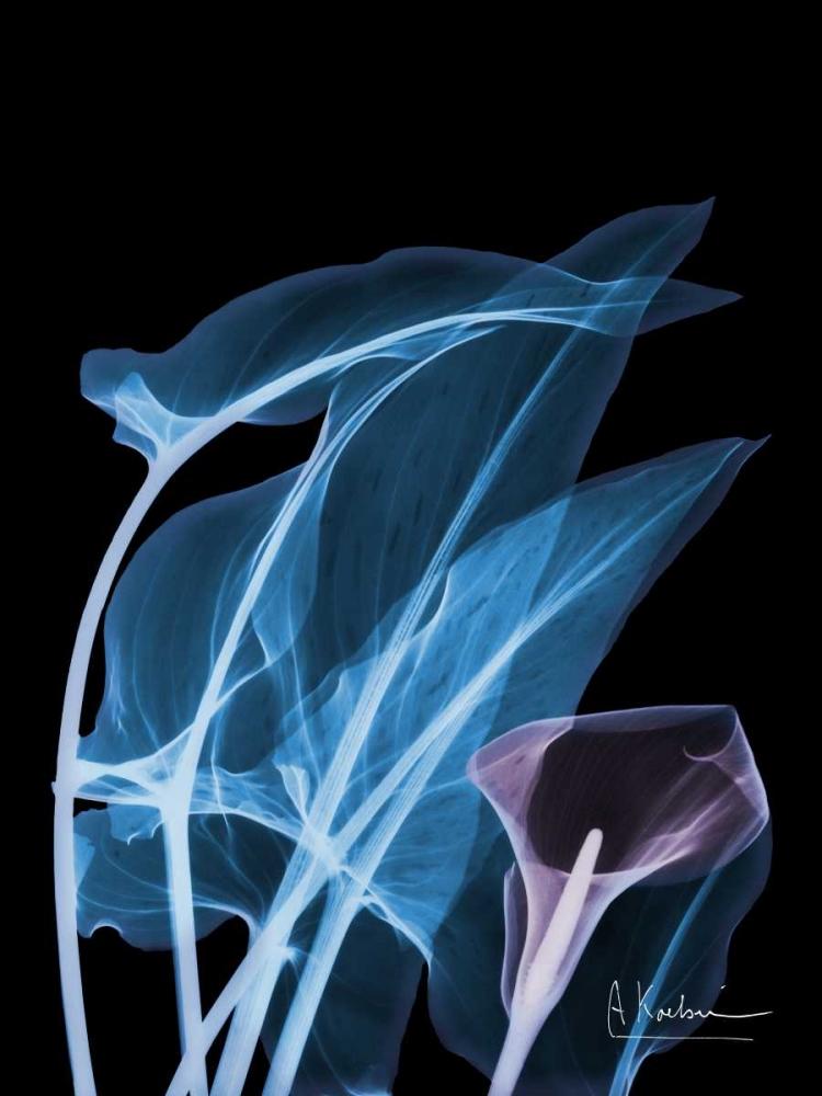 konfigurieren des Kunstdrucks in Wunschgröße Blue Purple Calla von Koetsier, Albert