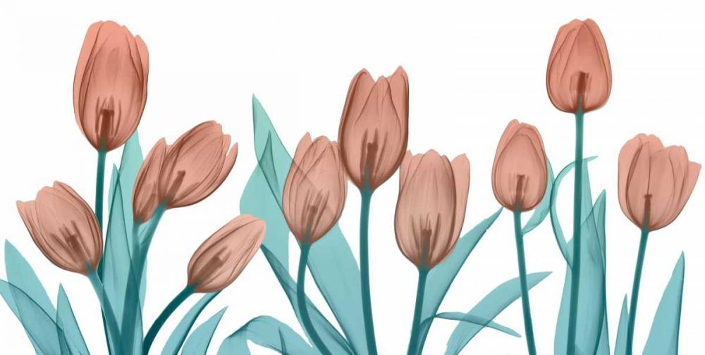 Burning Tulips von Koetsier, Albert <br> max. 213 x 107cm <br> Preis: ab 10€