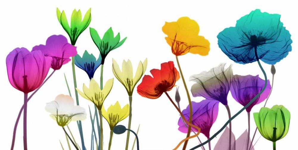 konfigurieren des Kunstdrucks in Wunschgröße Floral Calm Pop von Koetsier, Albert