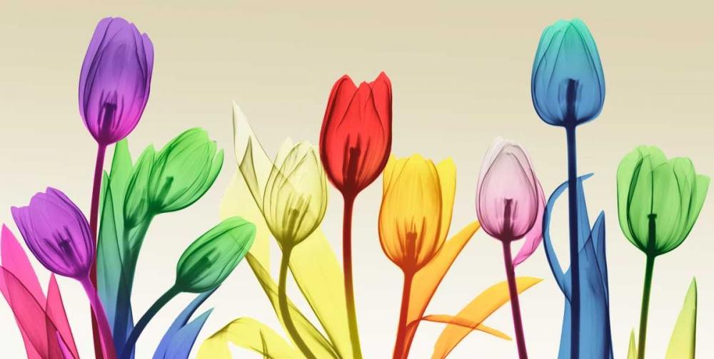 konfigurieren des Kunstdrucks in Wunschgröße Floral Rainbow Splurge von Koetsier, Albert