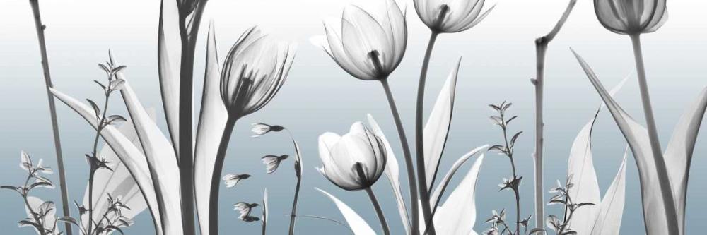 Heavenly Botanicals von Koetsier, Albert <br> max. 183 x 61cm <br> Preis: ab 10€