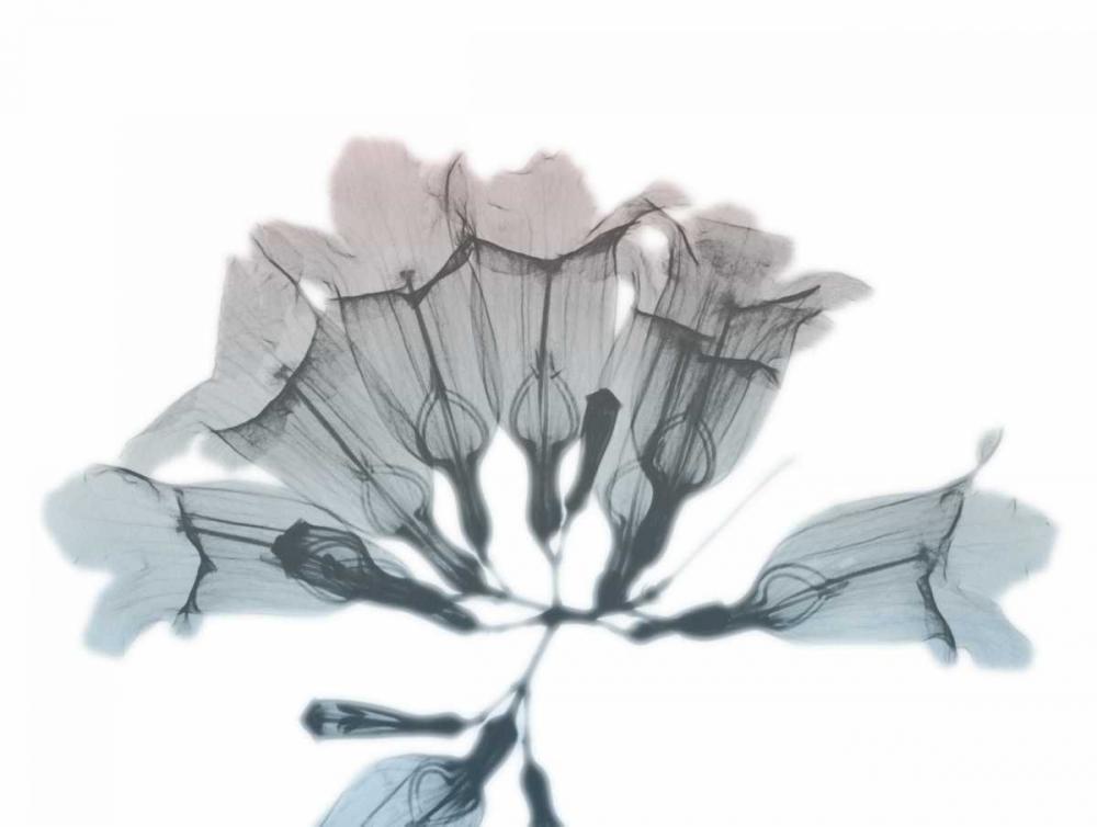 Blooming Jacaranoa von Koetsier, Albert <br> max. 155 x 117cm <br> Preis: ab 10€