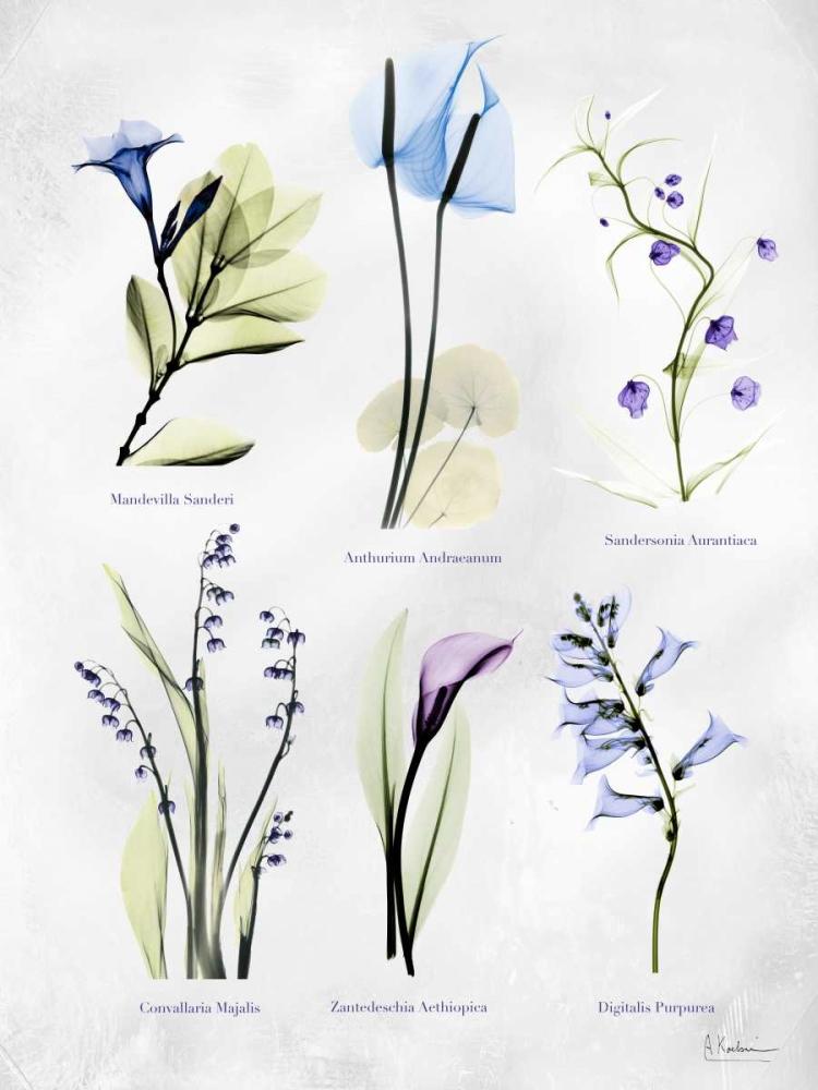 Kunstdrucke Kunstdrucke Thema botanisch bei Galerie Munk