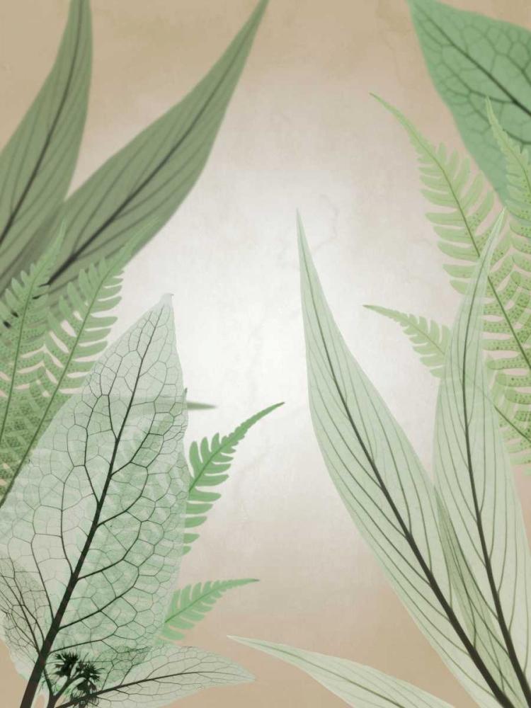 konfigurieren des Kunstdrucks in Wunschgröße Jungle Cruise von Koetsier, Albert