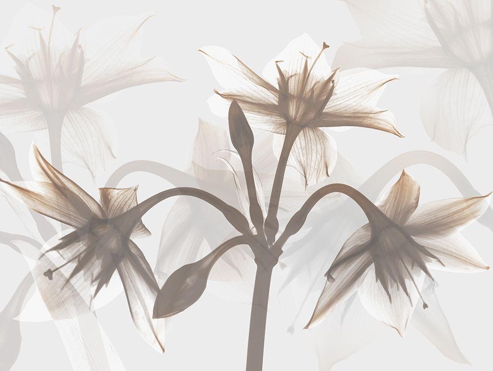 konfigurieren des Kunstdrucks in Wunschgröße Deserted Love 1 von Koetsier, Albert