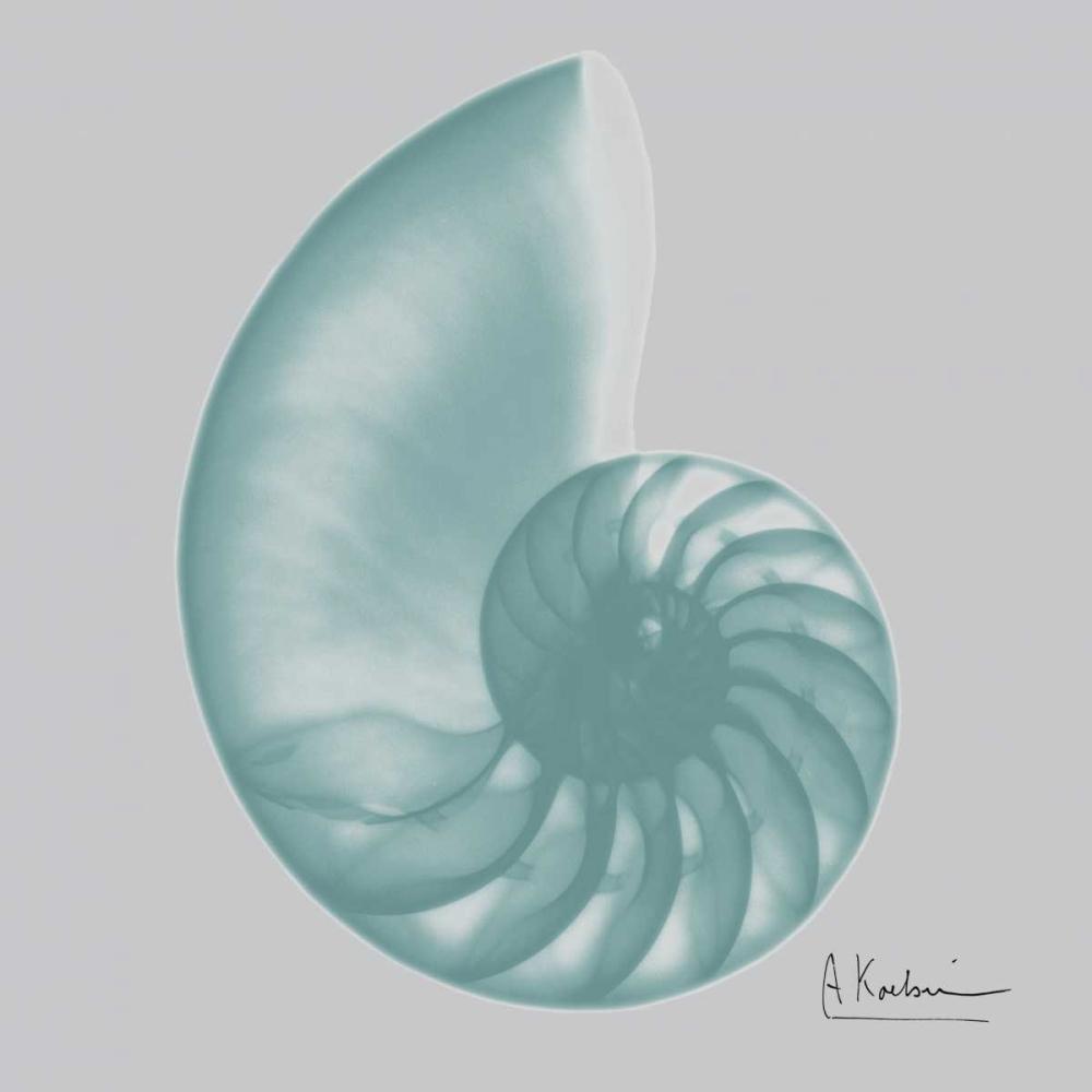 konfigurieren des Kunstdrucks in Wunschgröße Aquifer Sea Shell von Koetsier, Albert