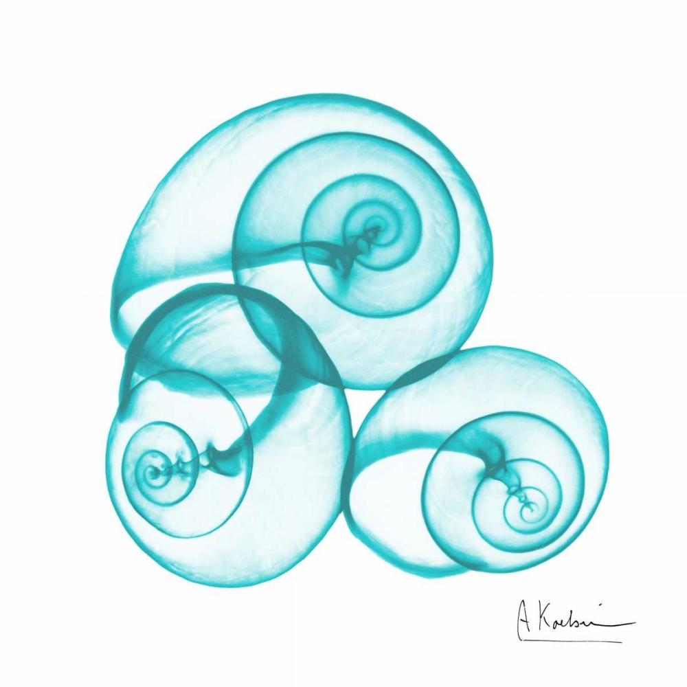 konfigurieren des Kunstdrucks in Wunschgröße Turquoise Sky Snails von Koetsier, Albert