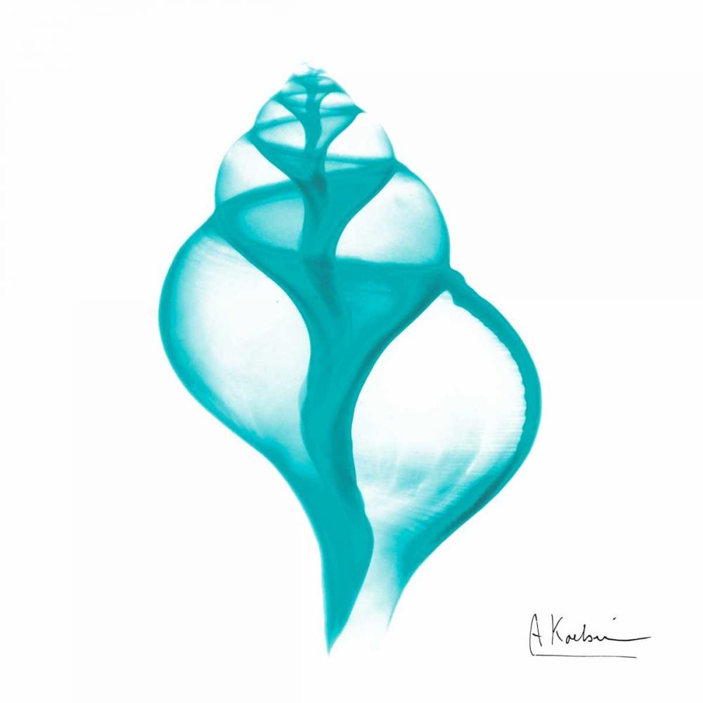 konfigurieren des Kunstdrucks in Wunschgröße Turquoise Tulip Shell von Koetsier, Albert