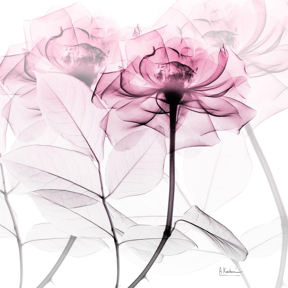konfigurieren des Kunstdrucks in Wunschgröße Lavish Pink Rose von Koetsier, Albert