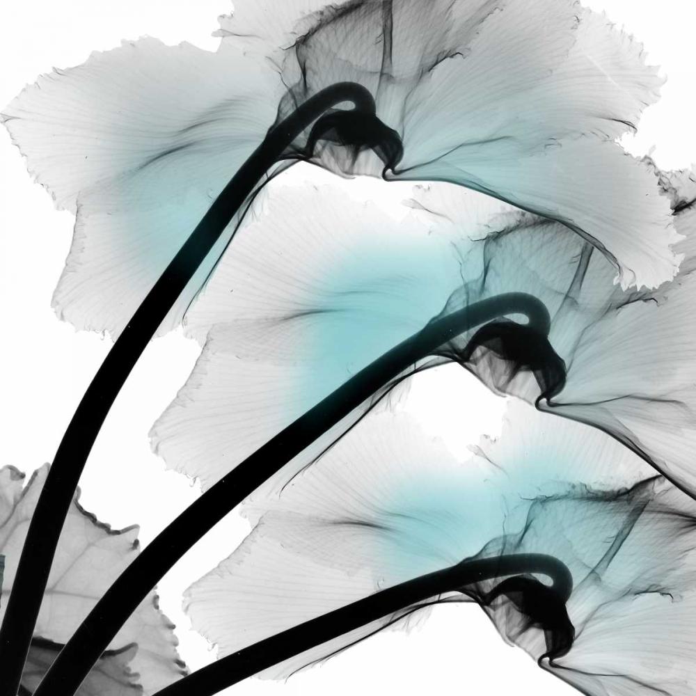 konfigurieren des Kunstdrucks in Wunschgröße Teal Luster Cyclamen von Koetsier, Albert