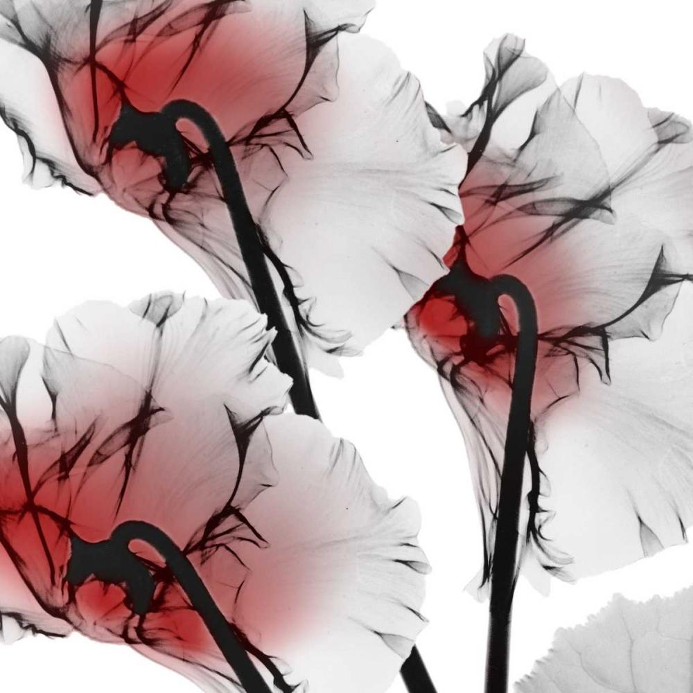 konfigurieren des Kunstdrucks in Wunschgröße Crimson Luster Cyclamen von Koetsier, Albert