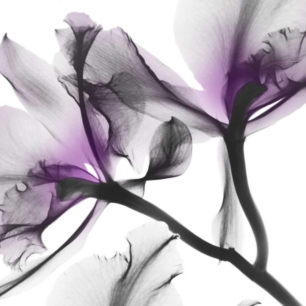 konfigurieren des Kunstdrucks in Wunschgröße Lavender Luster 1 von Koetsier, Albert