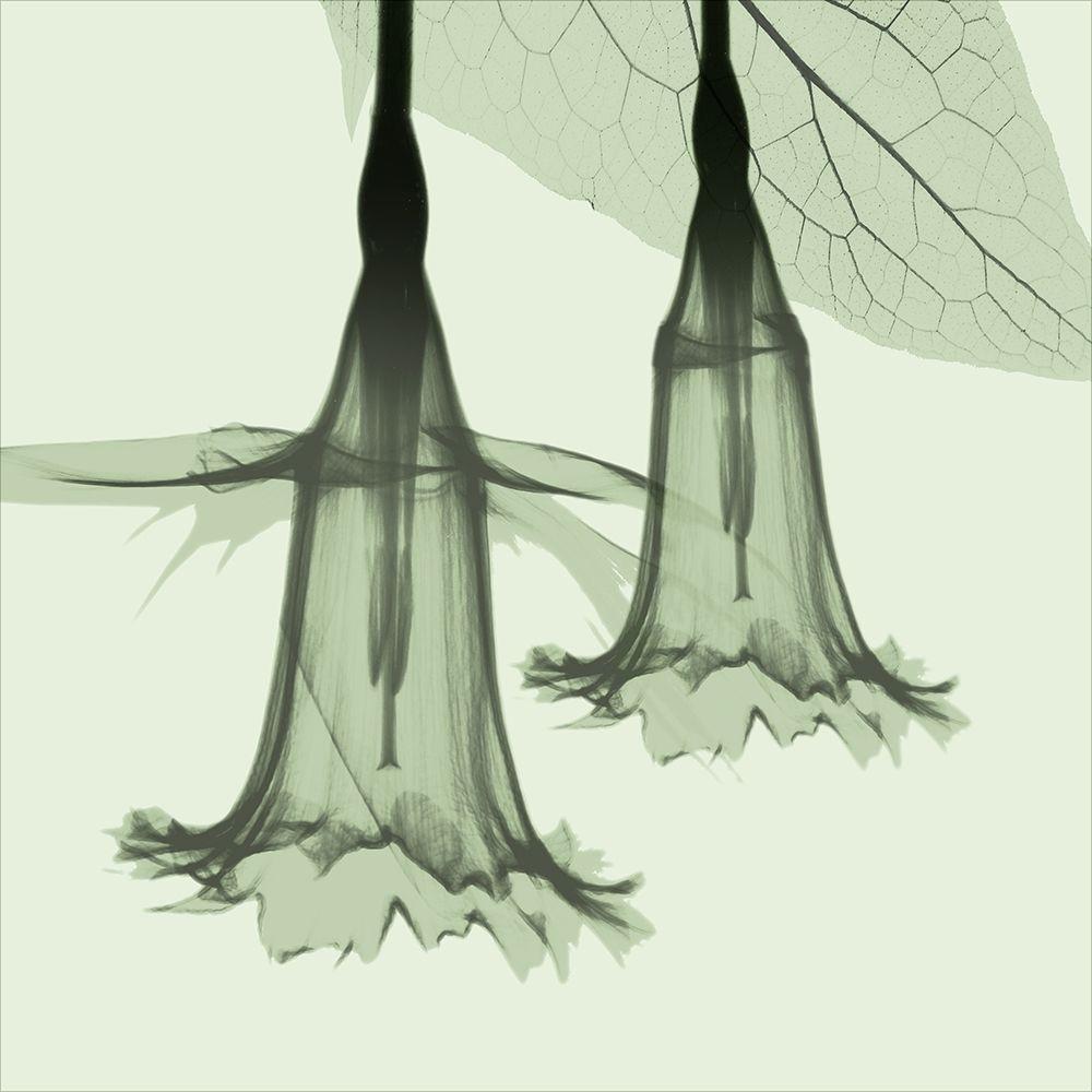 konfigurieren des Kunstdrucks in Wunschgröße Emerald Daffodil von Koetsier, Albert