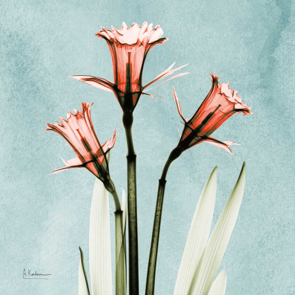konfigurieren des Kunstdrucks in Wunschgröße Daffodil Believe von Koetsier, Albert