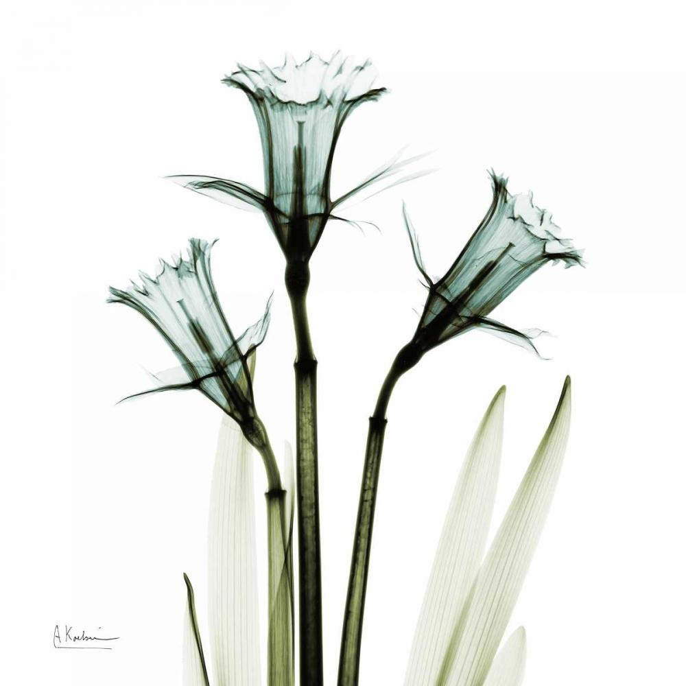 konfigurieren des Kunstdrucks in Wunschgröße Three Daffodils in Green von Koetsier, Albert