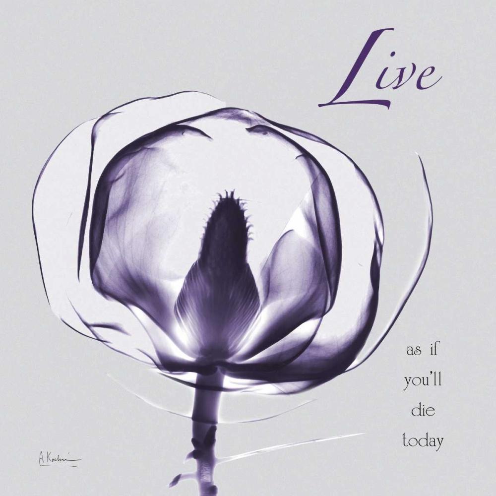 konfigurieren des Kunstdrucks in Wunschgröße Plum Magnolia Live von Koetsier, Albert