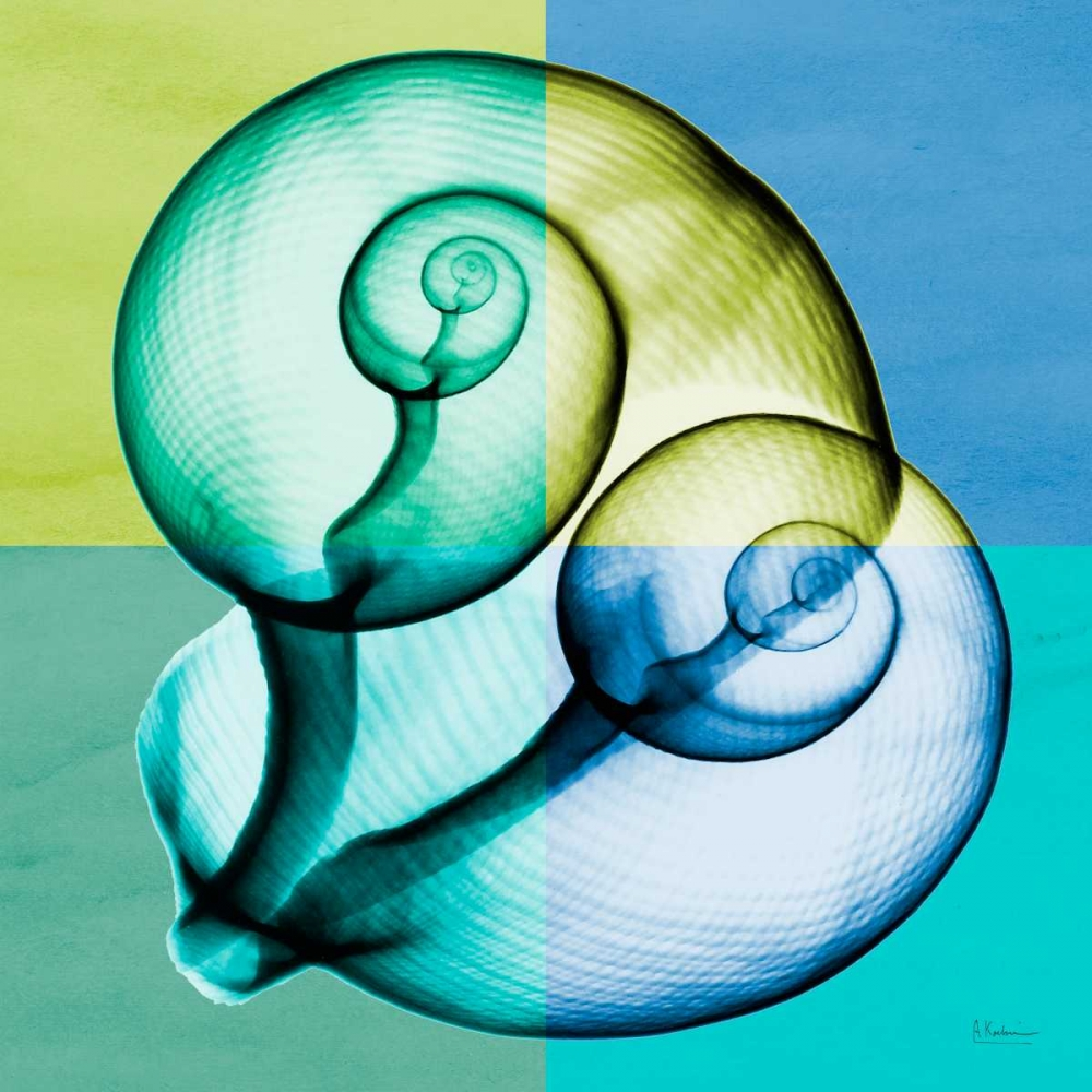 konfigurieren des Kunstdrucks in Wunschgröße Blue Green Shell 1 von Koetsier, Albert
