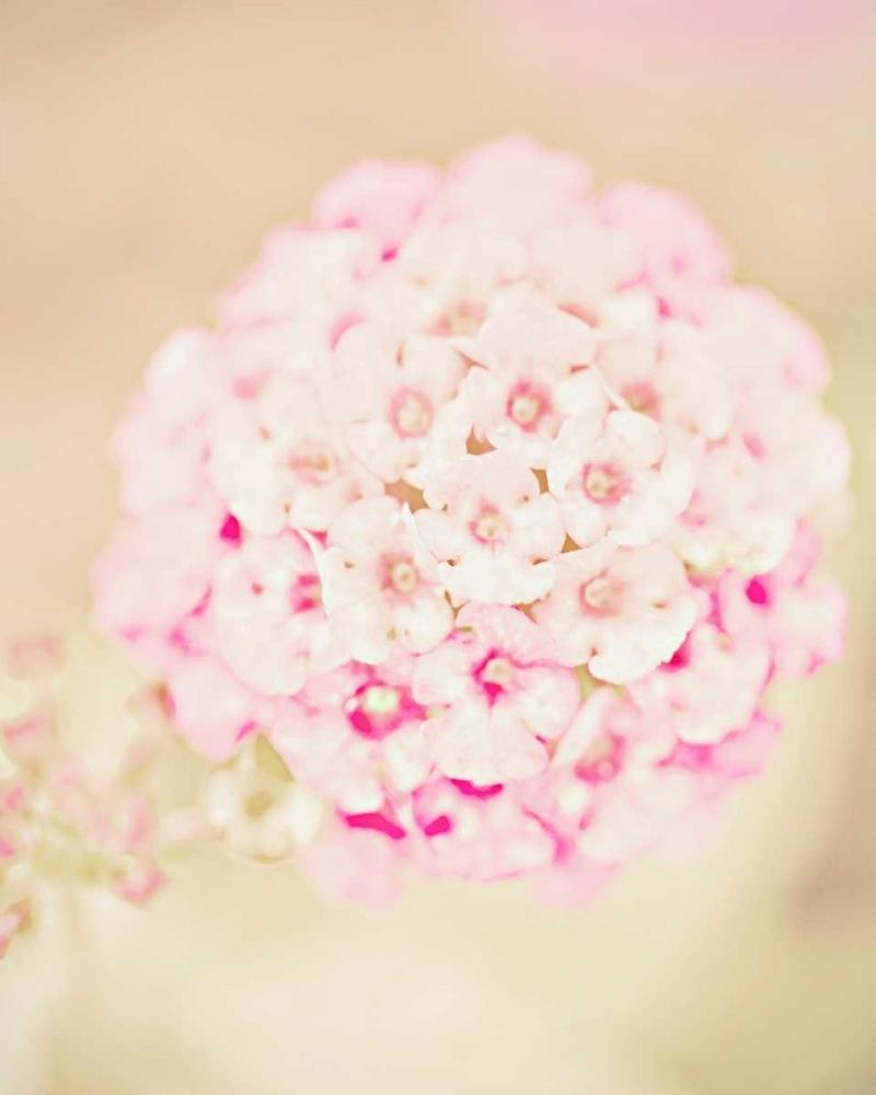 konfigurieren des Kunstdrucks in Wunschgröße Pink Flower Ball von Davis Ashley