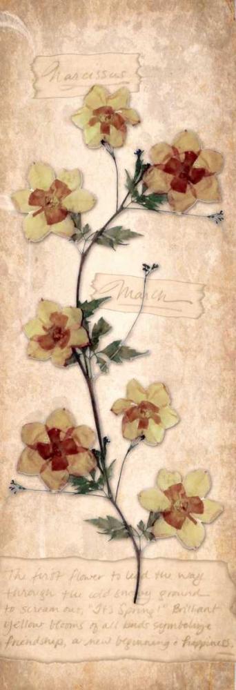 konfigurieren des Kunstdrucks in Wunschgröße March Daffodil von Stimson, Diane