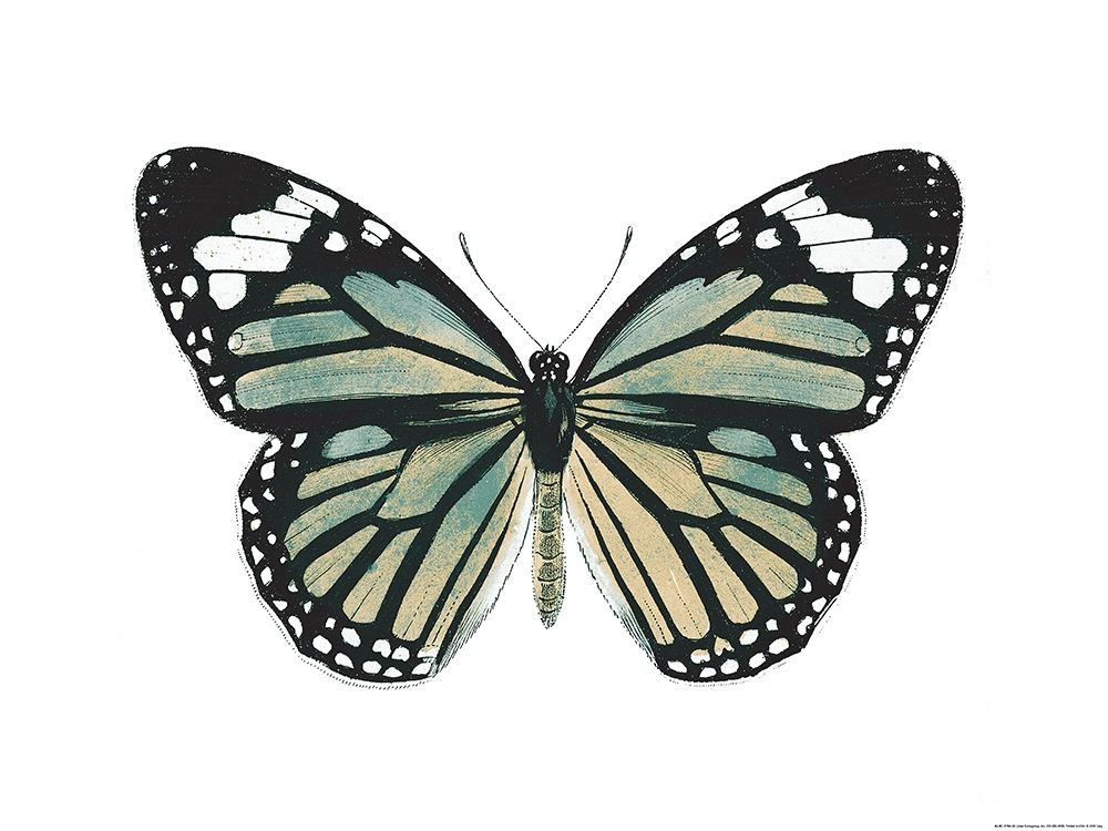konfigurieren des Kunstdrucks in Wunschgröße Neutral Butterfly von Grey, Jace