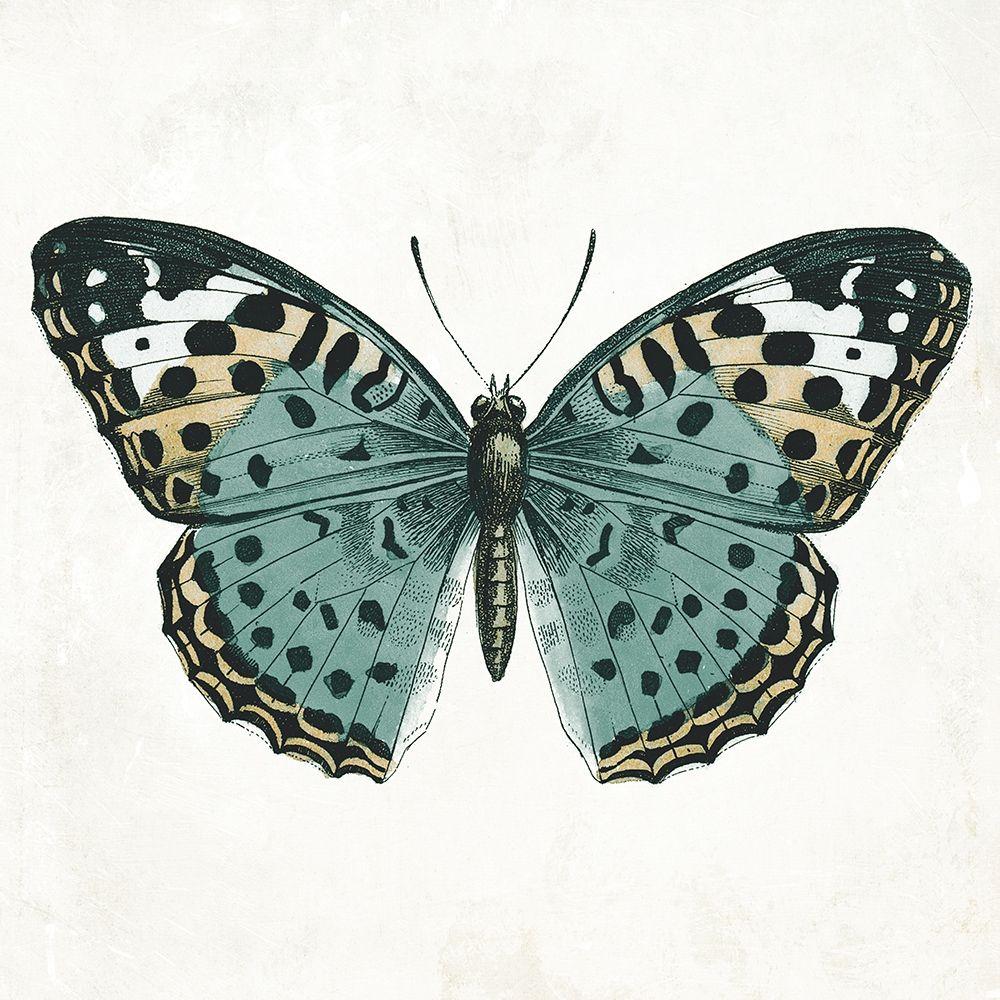 konfigurieren des Kunstdrucks in Wunschgröße Neutral Butterfly 2 von Grey, Jace