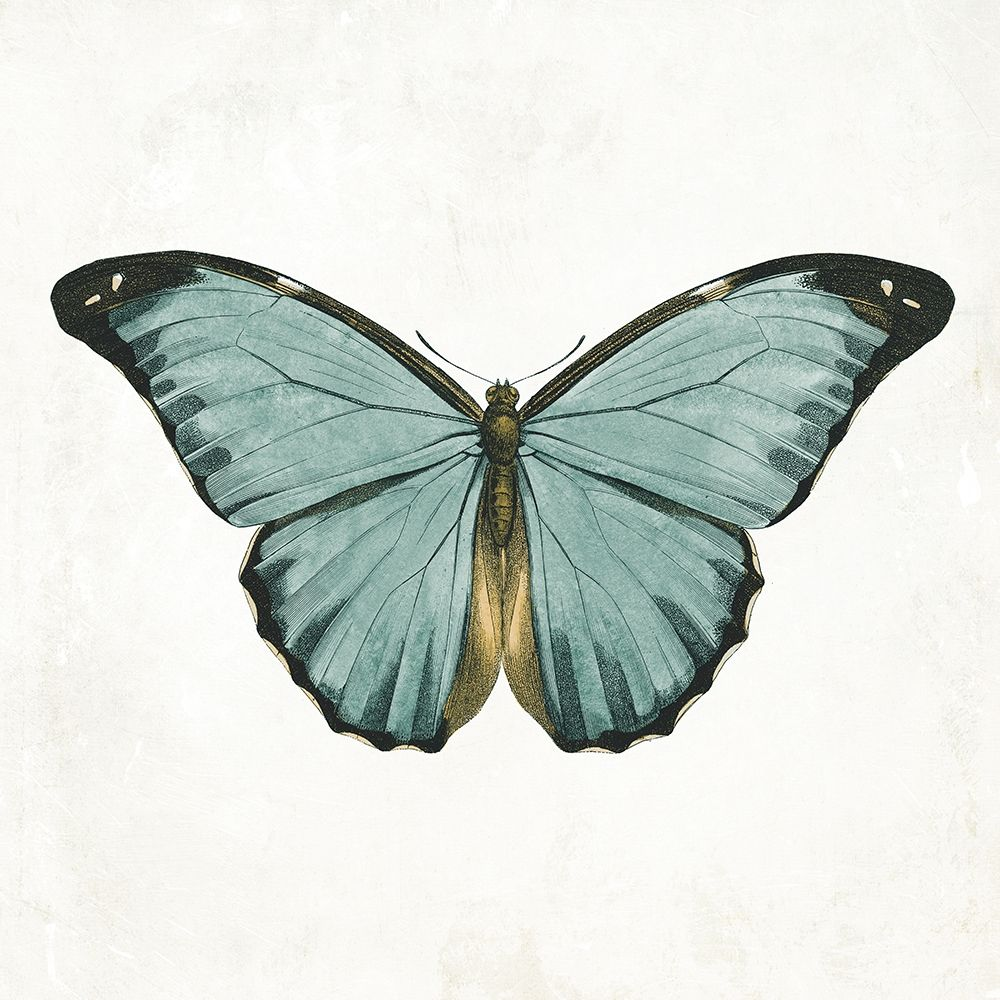konfigurieren des Kunstdrucks in Wunschgröße Neutral Butterfly 4 von Grey, Jace
