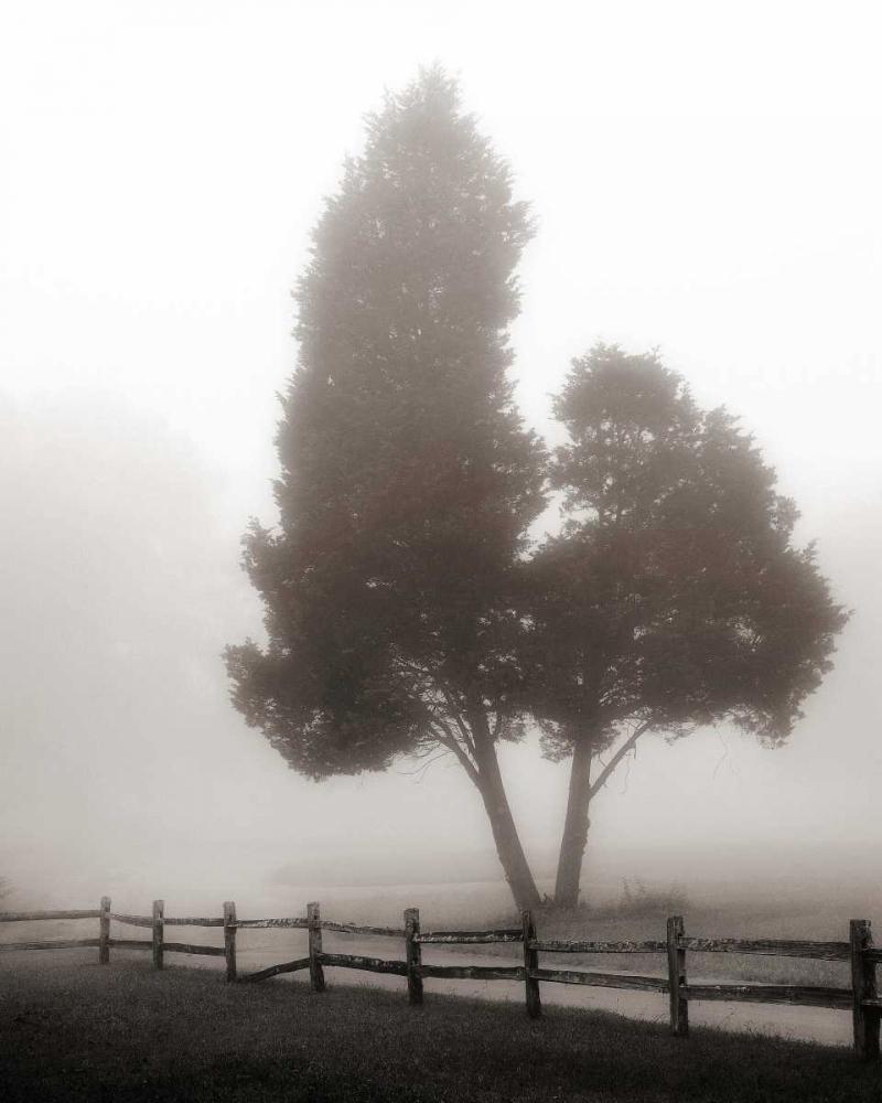 konfigurieren des Kunstdrucks in Wunschgröße Cedar Tree and Fence von Bell, Nicholas