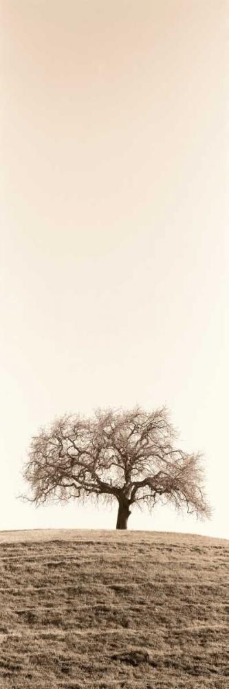 konfigurieren des Kunstdrucks in Wunschgröße Lone Oak Tree von Blaustein, Alan