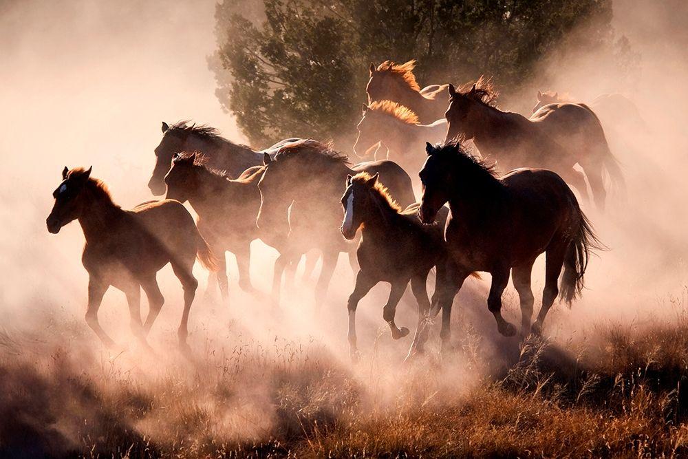 konfigurieren des Kunstdrucks in Wunschgröße Horses von Dearing, Lisa