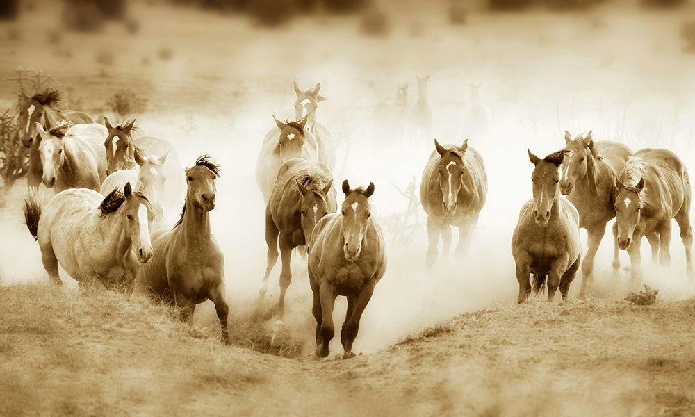 konfigurieren des Kunstdrucks in Wunschgröße San Cristobol Horses von Dearing, Lisa