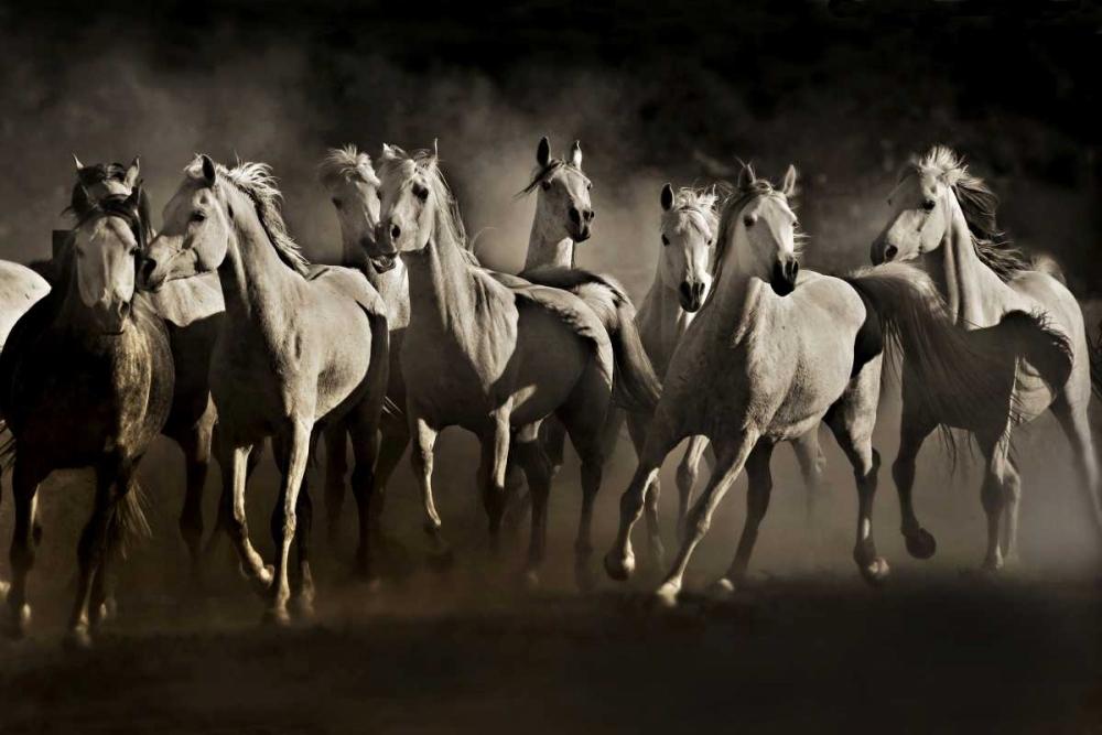konfigurieren des Kunstdrucks in Wunschgröße Dream Horses von Dearing, Lisa