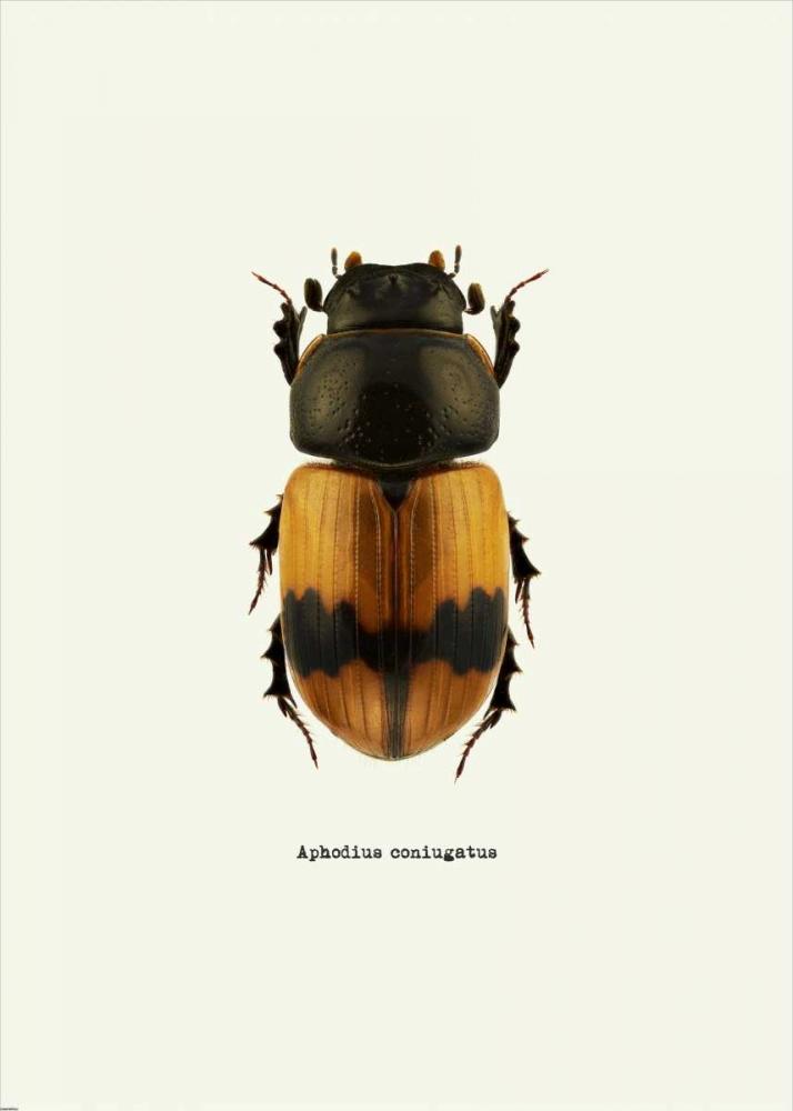 konfigurieren des Kunstdrucks in Wunschgröße Beetle Orange von GraphINC