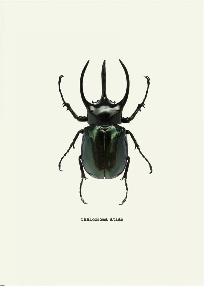 konfigurieren des Kunstdrucks in Wunschgröße Beetle Black von GraphINC