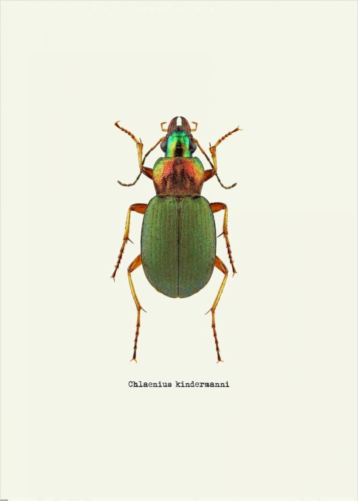 konfigurieren des Kunstdrucks in Wunschgröße Beetle Green von GraphINC