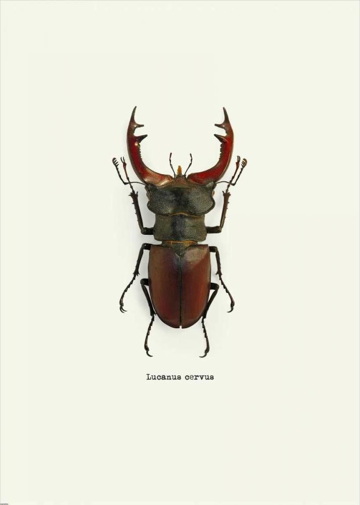 konfigurieren des Kunstdrucks in Wunschgröße Beetle Red von GraphINC