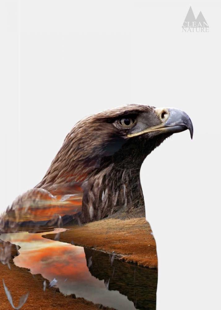 konfigurieren des Kunstdrucks in Wunschgröße Eagle von Clean Nature