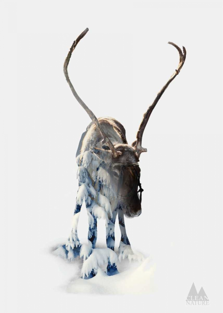 konfigurieren des Kunstdrucks in Wunschgröße Moose von Clean Nature