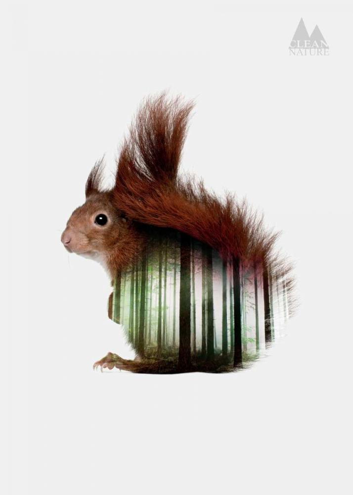 konfigurieren des Kunstdrucks in Wunschgröße Squirrel von Clean Nature