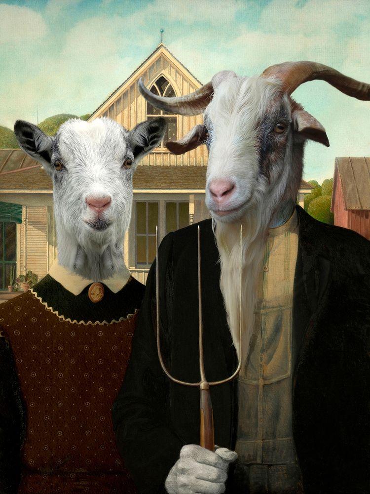 konfigurieren des Kunstdrucks in Wunschgröße American Goat von Tyberghien, Philippe