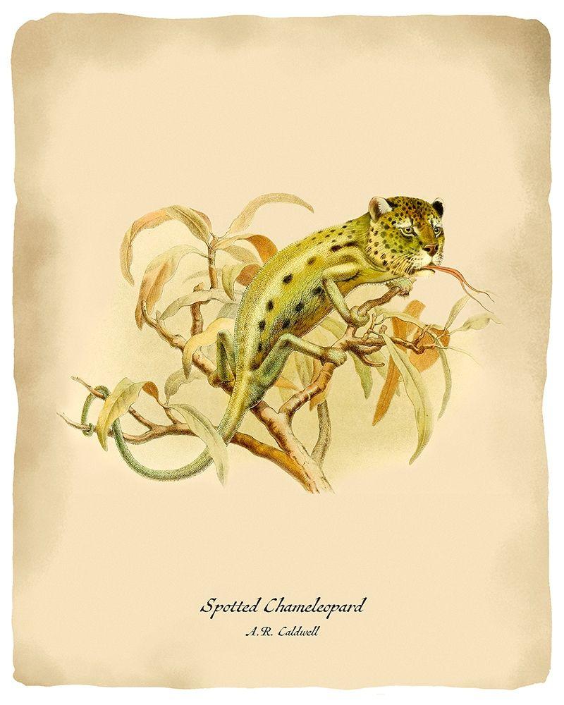 konfigurieren des Kunstdrucks in Wunschgröße Chameleopard von Tannehill, Angela