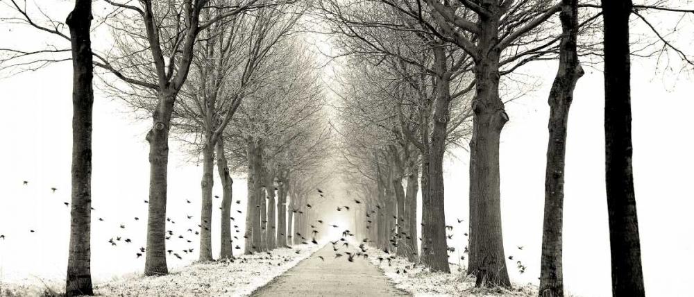 konfigurieren des Kunstdrucks in Wunschgröße Birds von Van de Goor, Lars