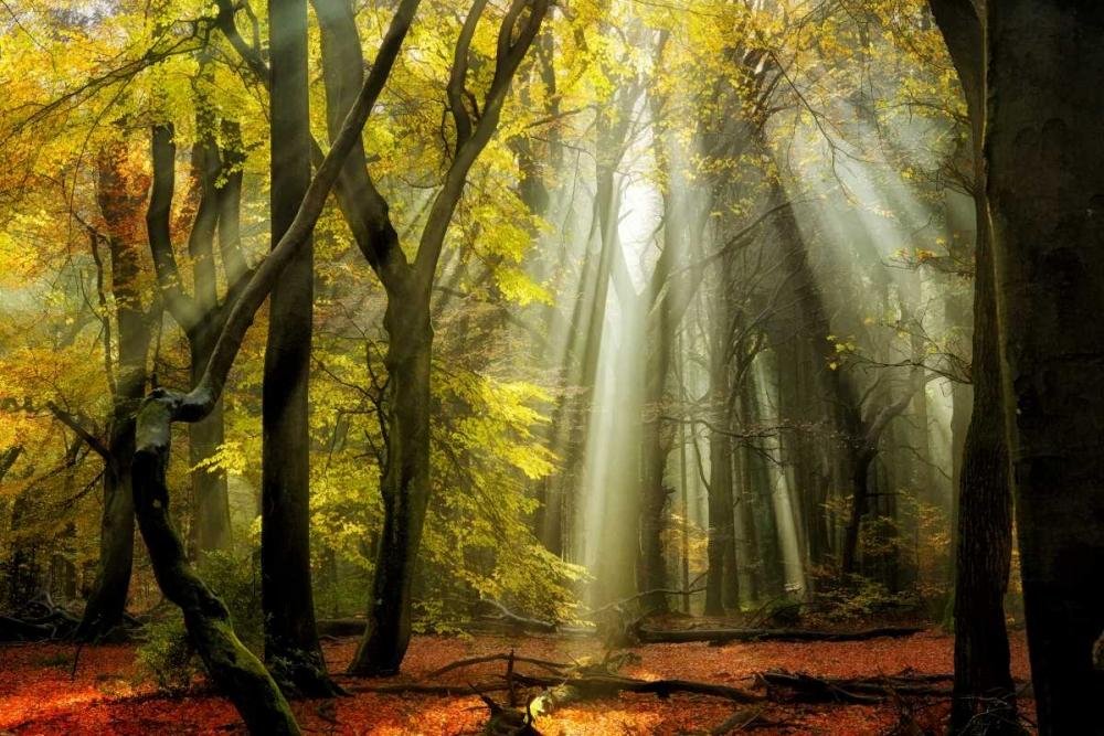 konfigurieren des Kunstdrucks in Wunschgröße Yellow Leaves Rays von Van de Goor, Lars